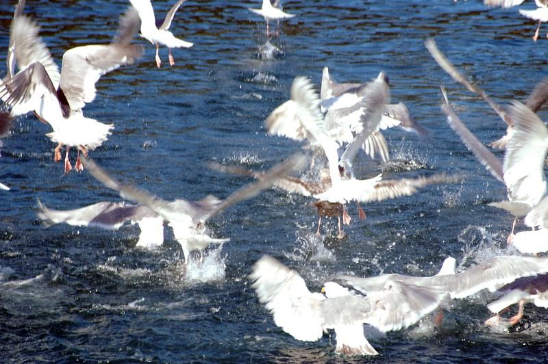 Alaska bird feed