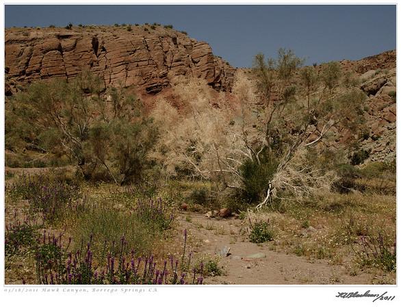 Hawk Canyon TAB11MK4-07370