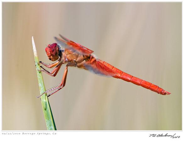 Dragonfly TAB10MK4-29763