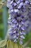 Flowers TAB20D5-08960-Edit