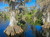Blue Cypress Lake IMG_1065-Edit