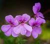 Flowers TAB20D5-08998-Edit