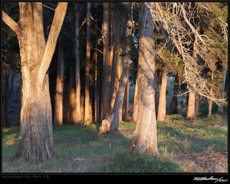 Los Osos Trees TAB11MK4-4000