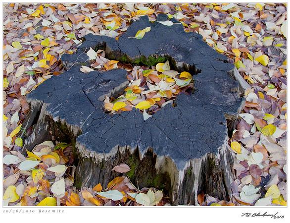 Yosemite Tree Stump