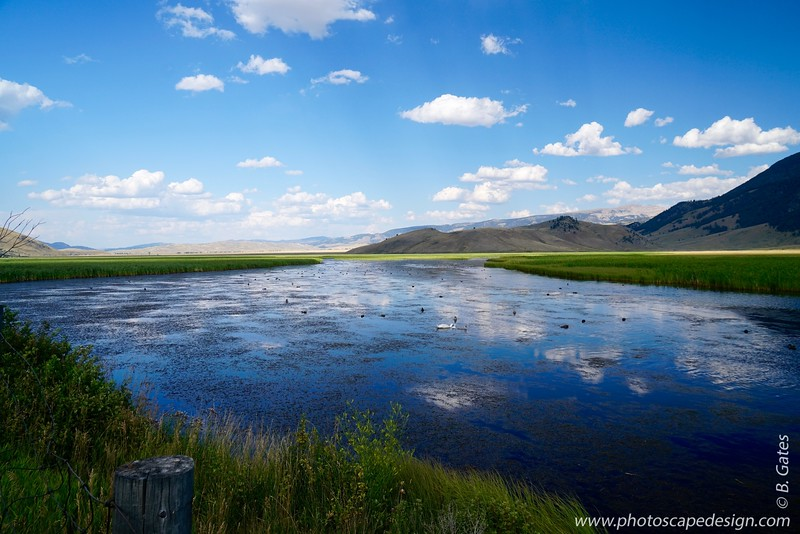National Elk Refuge - Jackson, Wyoming