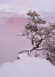 Bonsai Winter