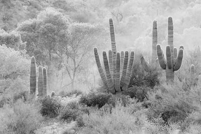 Dust Guardians