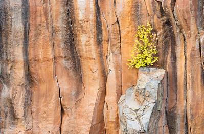 Basaltic Perch