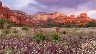 Spring under the Red Rocks