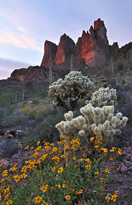 Three Sisters Spring. Spring flowers below the Three Sisters formation in the Superstition Mountains