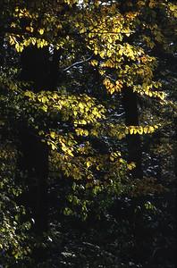 Autumn, Franklin park, Philadelphia