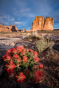 Sunrise with Indian Paintbrush and Courthouse Towers, Arches, N.P.