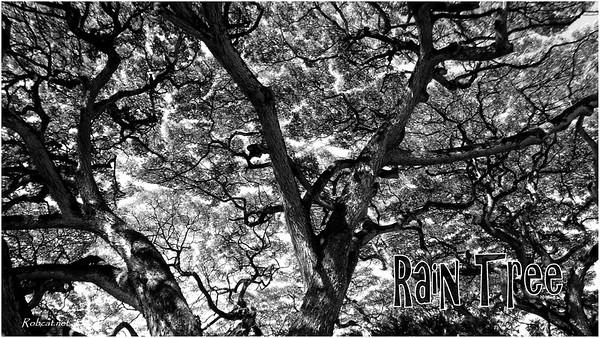 robcat_DSCF2984_rain_tree_osL
