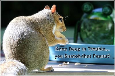robcat_knee_deep_trouble_snatch_osL