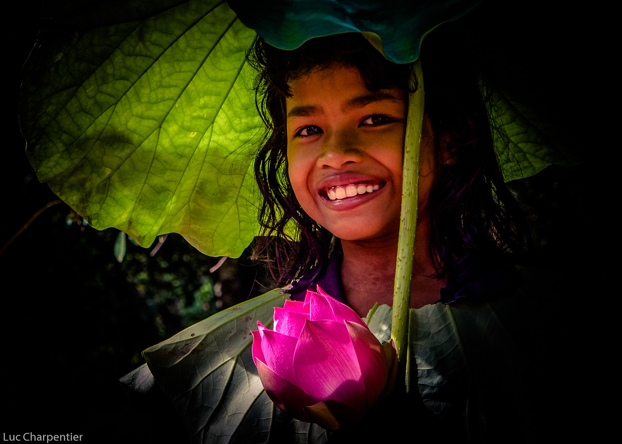 Under a Lotus Leaf