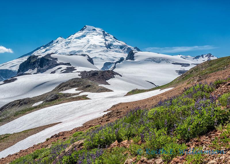 Mount Baker, from Ptarmigan Ridge