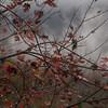 Grey Day in Fall