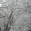 Snowy Branches 2