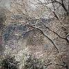 Winter Multitudes