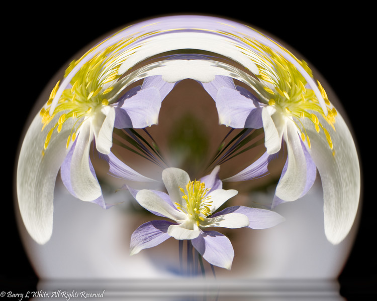 Columbine in Sphere (0043)