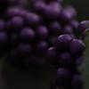 Beauty berries. Hobbs State Park, AR