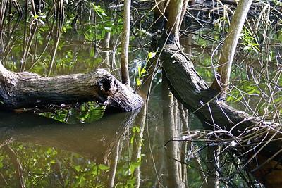 Secret Woods Nature Preserve, Dania, Fla., Oct. 31, 2015.