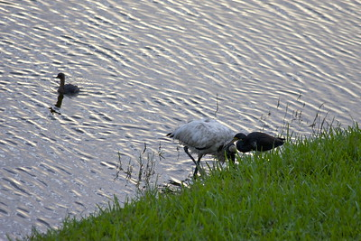 Birds unite, lol. Pembroke Pines, Fla., December 2015.