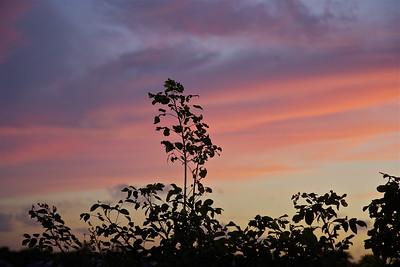 Evening, Pembroke Pines, Fla., Dec. 17, 2015.