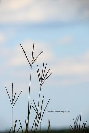 Sand Hill Crane Tracks in the Wind