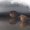 Virginia Rails under an icy overhang