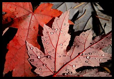 Leaves in the backyard. November 6, 2005