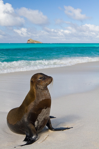 Portrait - Galapagos