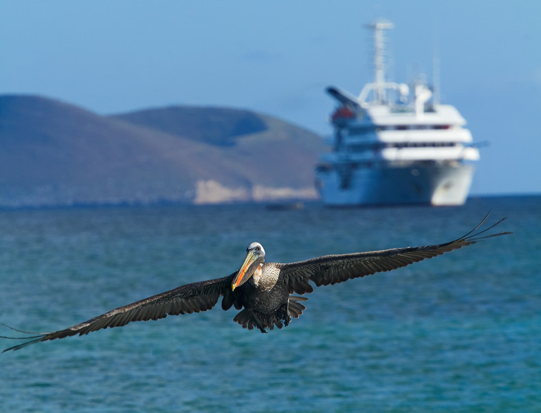 Fly by, Galapagos Cruise