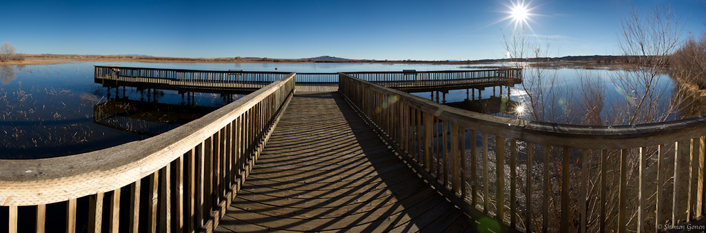 Eagle Scout - Bosque Del Apache, New Mexico