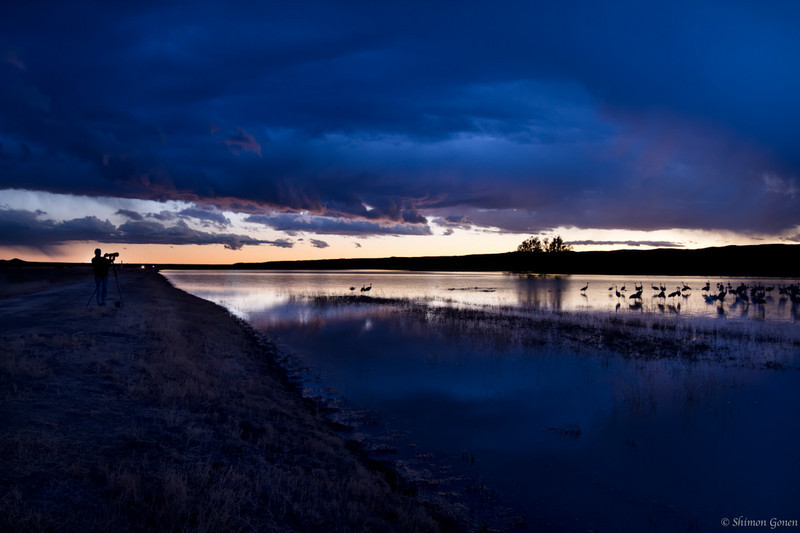 Catching the last light - Bosque Del Apache, New Mexico