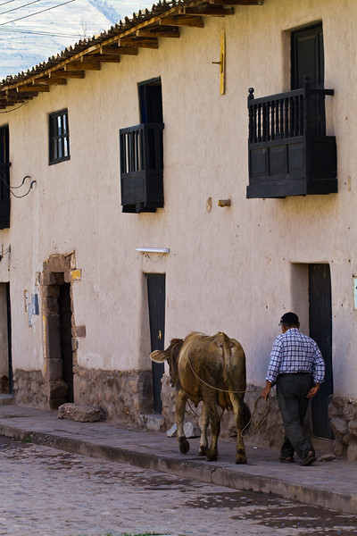 Man and his cow going on a stroll - Peru