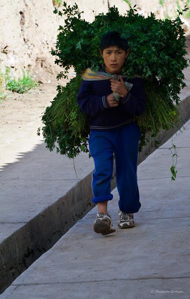 Harvest - Peru