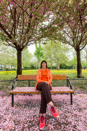 Cherry blossom - Vienna, Austria