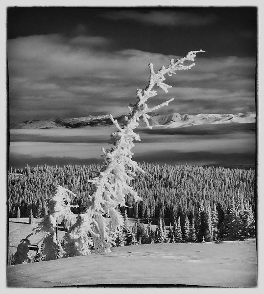 Hoar Frost on 2 Top Mt.
