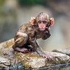 This baby snow monkey's fur is not so fluffy after a swim in the steamy water...Japan