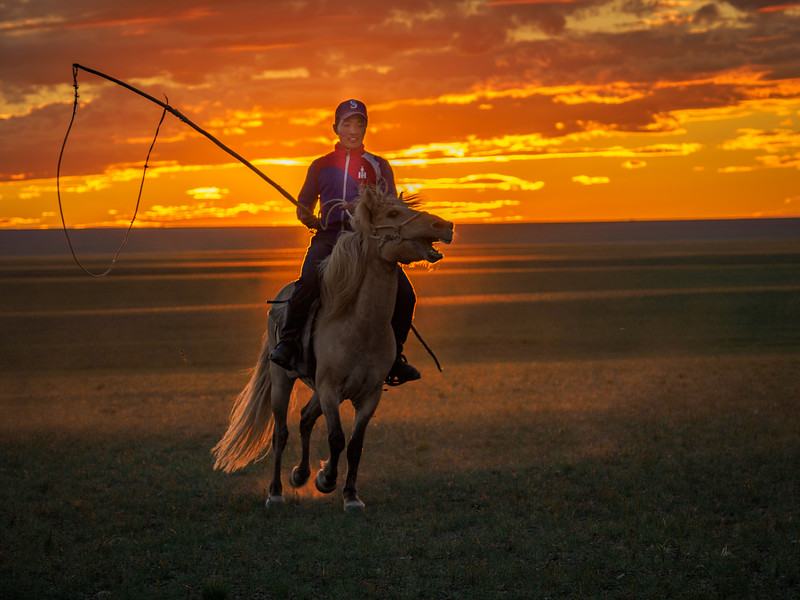 """A nomad demonstrating his horsemanship in the setting sun, using a lariat of a different kind to """"rope""""  horse and sheep...Mongolia"""