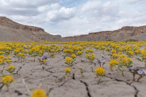 2014-04 Utah Bloom