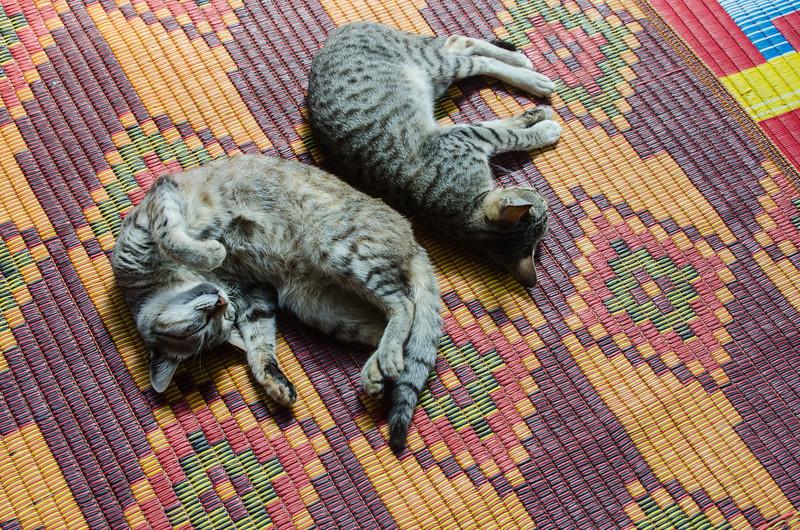 Cats at the Nga Phe Chaung Monastery