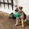 Puppy begging at Resurrection Gate