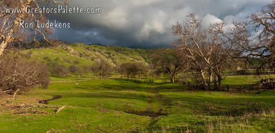 05 May:  Spring rains help grow the grasses that feed the roaming cattle on these beautiful hills covered with Sycamores and Oaks..