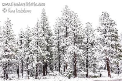 Surprise June Snowstorm - Mount Shasta