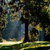 Sunlit Tree, Konopiste