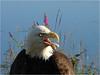 b-karen_kulengowski_eagle