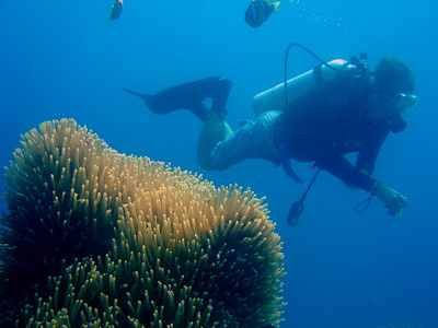 Divers and snorkelers