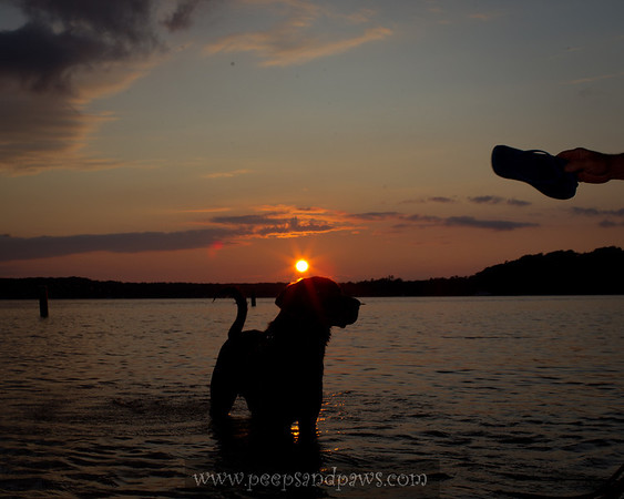 Amos playing fetch at Bowers Harbor at sunset on 8.7.2011